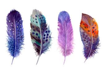Hand drawn watercolour bird feathers vibrant boho style bright illustration. Fotomurales