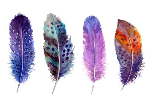 Hand drawn watercolour bird feathers vibrant boho style bright illustration.