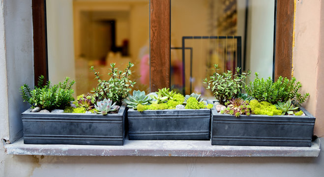 Various green plants in window boxes on a windowsill.