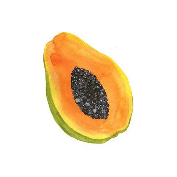 Fresh papaya piece isolated on white background. Hand drawn watercolor illustration.
