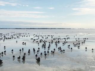 Foto auf Gartenposter Antarktika FLOCK OF BIRDS IN SEA AGAINST CLOUDY SKY