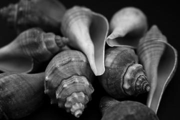 Fototapeta Close-Up Of Seashells obraz