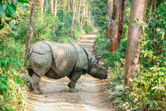 Rhino of Chitwan national park nepal