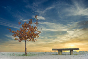 Single tree and seat bench at park empty and alone marking seasonal depression