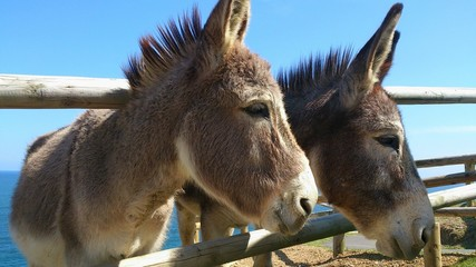 Donkeys At Shore Against Clear Sky