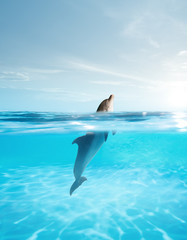 Tuinposter Dolfijn view of nice bottle nose dolphin swimming in blue crystal water