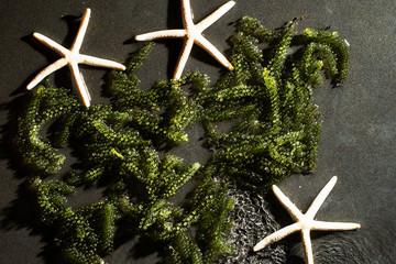 Umibudo, Japanese seaweed know as sea grapes