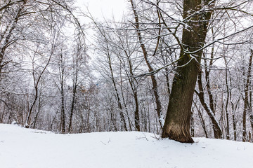 snowy trees in the park of Kaluga, Russia