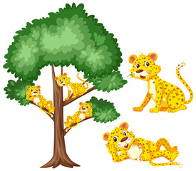 Big tree and cute tigers on white background