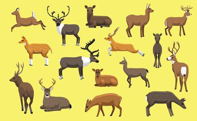 Various Deer Cute Cartoon Vector Illustration