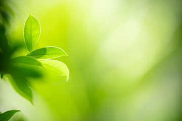 Foto op Aluminium Macrofotografie Closeup nature view of green leaf on blurred greenery background in garden with copy space for text using as summer background natural green plants landscape, ecology, fresh wallpaper concept.