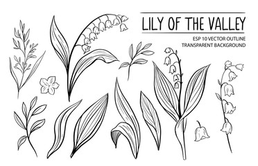Lily of the vally. Hand drawn outline converted to vector