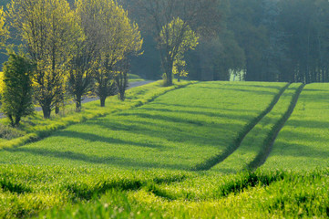 Foto auf AluDibond Blau türkis landscape in the morning sun