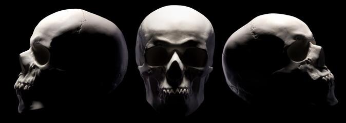Set of gypsum model of the human skulls isolated on black background