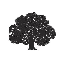 Obraz Oak tree logo. Isolated oak tree on white background - fototapety do salonu