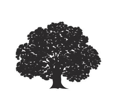 Oak tree logo. Isolated oak tree on white background