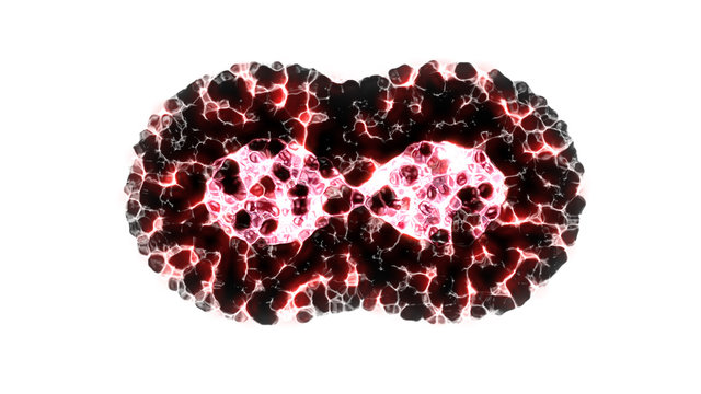 Binary fission cells division motion graphic on white background