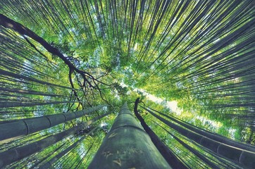 LOW ANGLE VIEW OF BAMBOO TREES AGAINST SKY