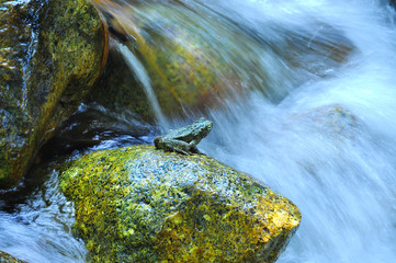 Close-Up Of Frog On Rock At Waterfall