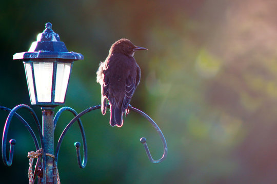 CLOSE-UP OF BIRD ON LIGHTPOST