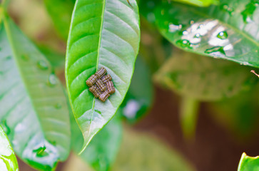 植物の葉の上にある昆虫の糞の写真