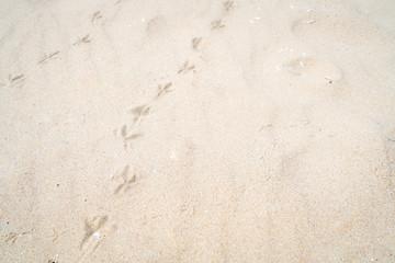 砂浜の鳥の足跡の写真
