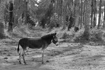 Foto auf Acrylglas Esel side view od donkey STANDING BY TREES