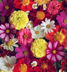 Canvas Prints Floral floral background, top view. garden flowers.