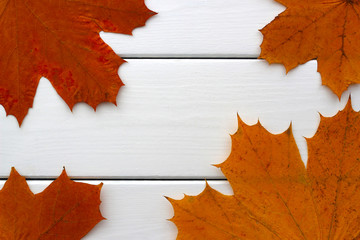 Autumn leaves from a Norwegian maple tree on a white painted wooden table