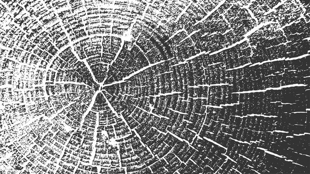 Tree Rings Vector Texture. Wood Log with Cracks