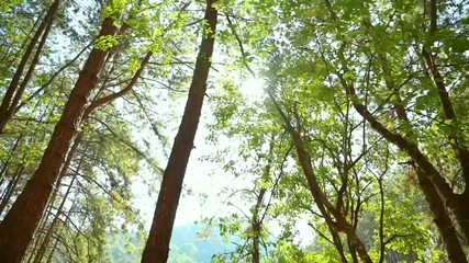 Wall Mural - The light shines on the verdant green forest in Thailand.