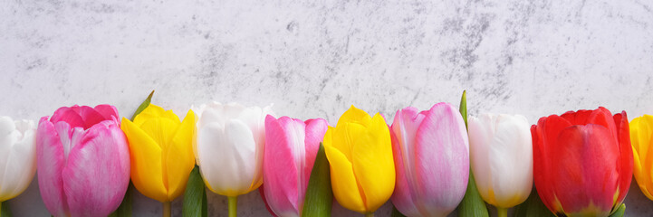 Multicolored tulips in a row against a light gray stucco wall.