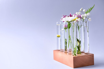 Test tubes with plants on light background
