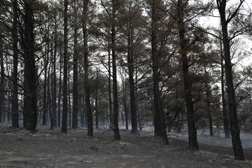 Charred trees left in the wake of a recent bushfire are seen near Bumbalong