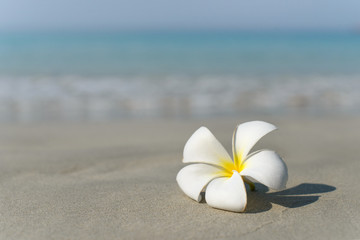 Zelfklevend Fotobehang Frangipani White and pink plumeria frangipani flower on sandy beach in front of sea coast. Tropical exotic view. Travel vacation concept. Free copy space.