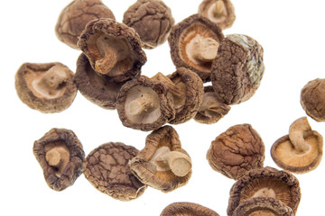 dry mushrooms on a white background