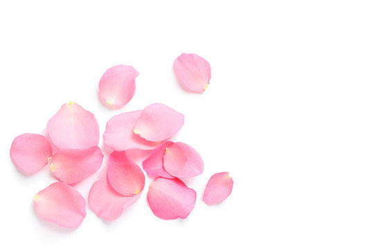 Fresh pink rose petals on white background, top view