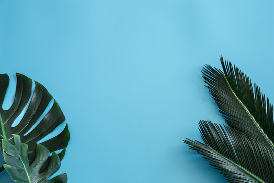 Beautiful tropical leaves on a blue background. Poster banner, postcard template.