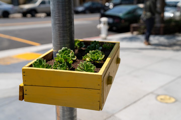 Yellow basket drawer filled with succulent plants hanging on street post