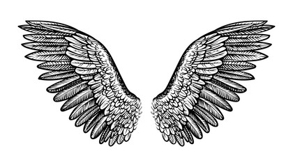 Pair of spread out wings, vector illustration.