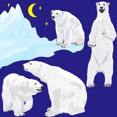 Polar bears at blue