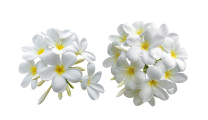 Zelfklevend Fotobehang Frangipani Tropical flowers frangipani (plumeria) on white background