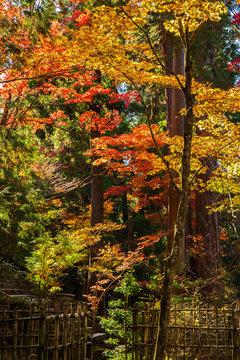 日本の秋 滋賀 湖東三山 西明寺61  Autumn in Japan, Shiga Prefecture, Koto-sanzan Saimyoji Temple #61