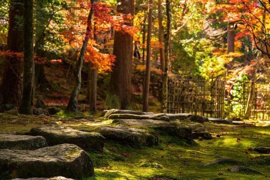 日本の秋 滋賀 湖東三山 西明寺62  Autumn in Japan, Shiga Prefecture, Koto-sanzan Saimyoji Temple #62