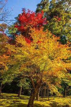 日本の秋 滋賀 湖東三山 西明寺66  Autumn in Japan, Shiga Prefecture, Koto-sanzan Saimyoji Temple #66
