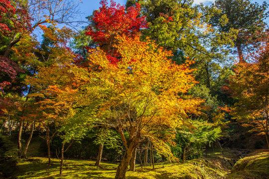 日本の秋 滋賀 湖東三山 西明寺67  Autumn in Japan, Shiga Prefecture, Koto-sanzan Saimyoji Temple #67