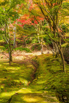 日本の秋 滋賀 湖東三山 西明寺75  Autumn in Japan, Shiga Prefecture, Koto-sanzan Saimyoji Temple #75