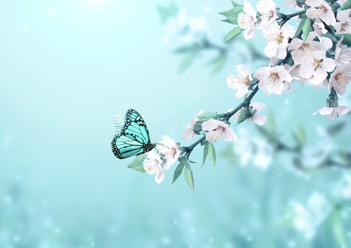 Beautiful magic spring scene with cherry flowers and butterfly