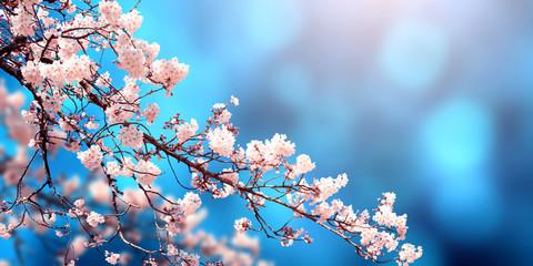 Beautiful magic spring scene with sakura flowers