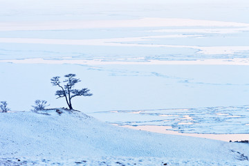 Lake Baikal. Olkhon Islands in spring time. A beautiful larch tree called the Wish Tree on a hill amid ice drift in the Small Sea Strait in fog and snowfall at sunset. Minimalistic landscape